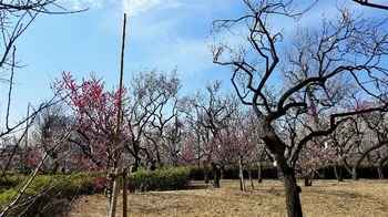 梅園の風景2r.jpg
